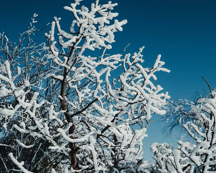 branches of frozen tree in winter forest