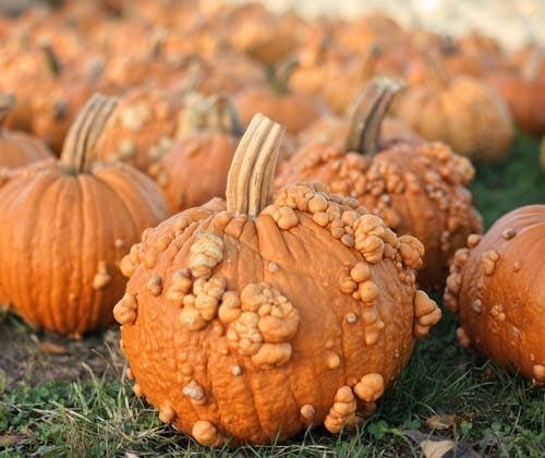 Autumn activities pumpkin picking